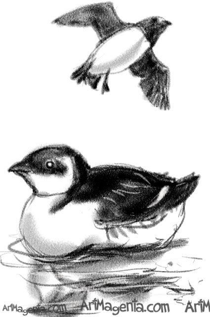 Little Auk sketch painting. Bird art drawing by illustrator Artmagenta