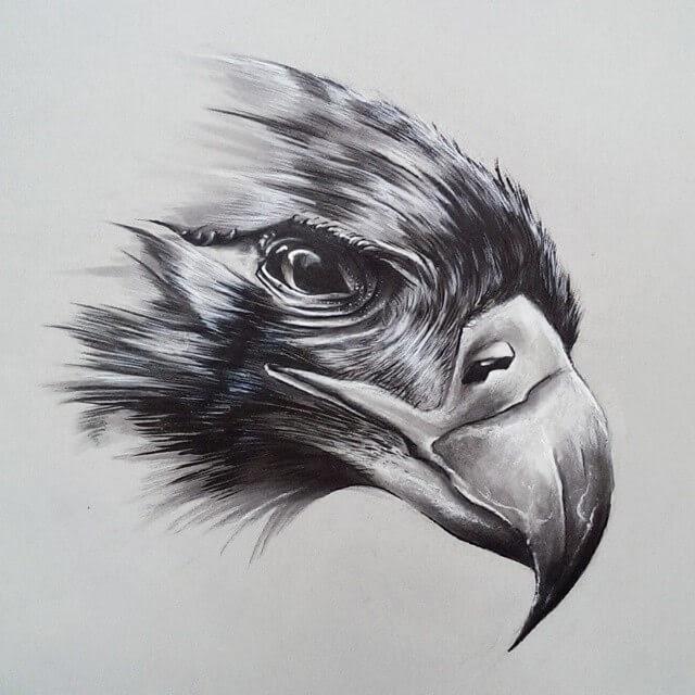 11-Eagle-SW-Whiteside-www-designstack-co