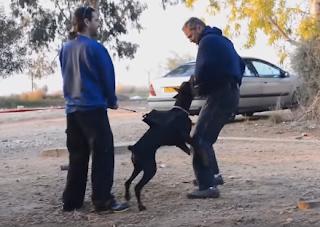 Köpek Isırmasında Yapılması Gerekenler