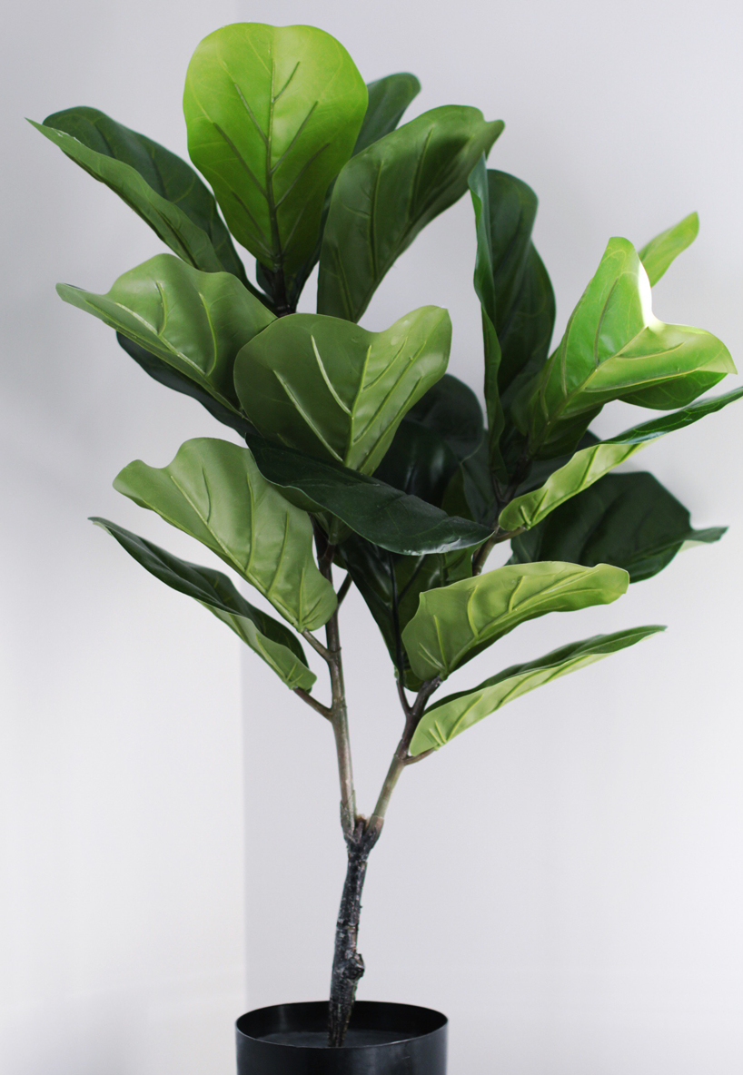 adairs fiddle leaf fig