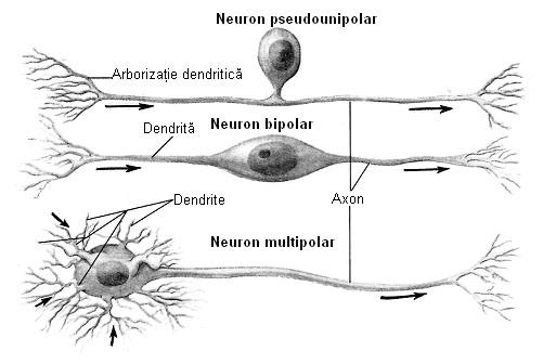 hernii intrasponginale