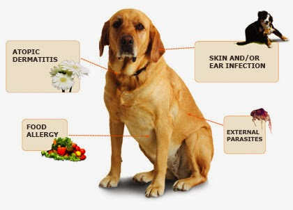 Divinely Toxic - Mycotoxins, Toxic Mold, Toxins, Candida and You