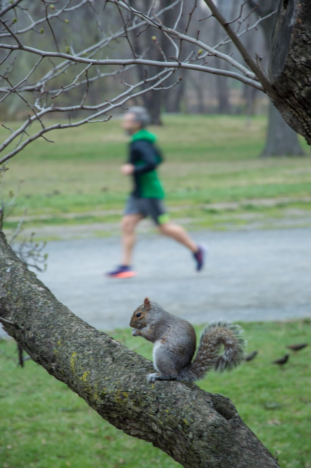 Squirrel in the Central Park