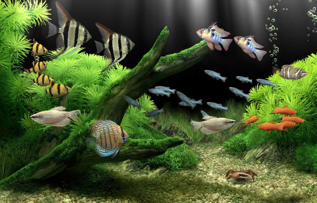 Dream aquarium 1.295 screensaver full crack version