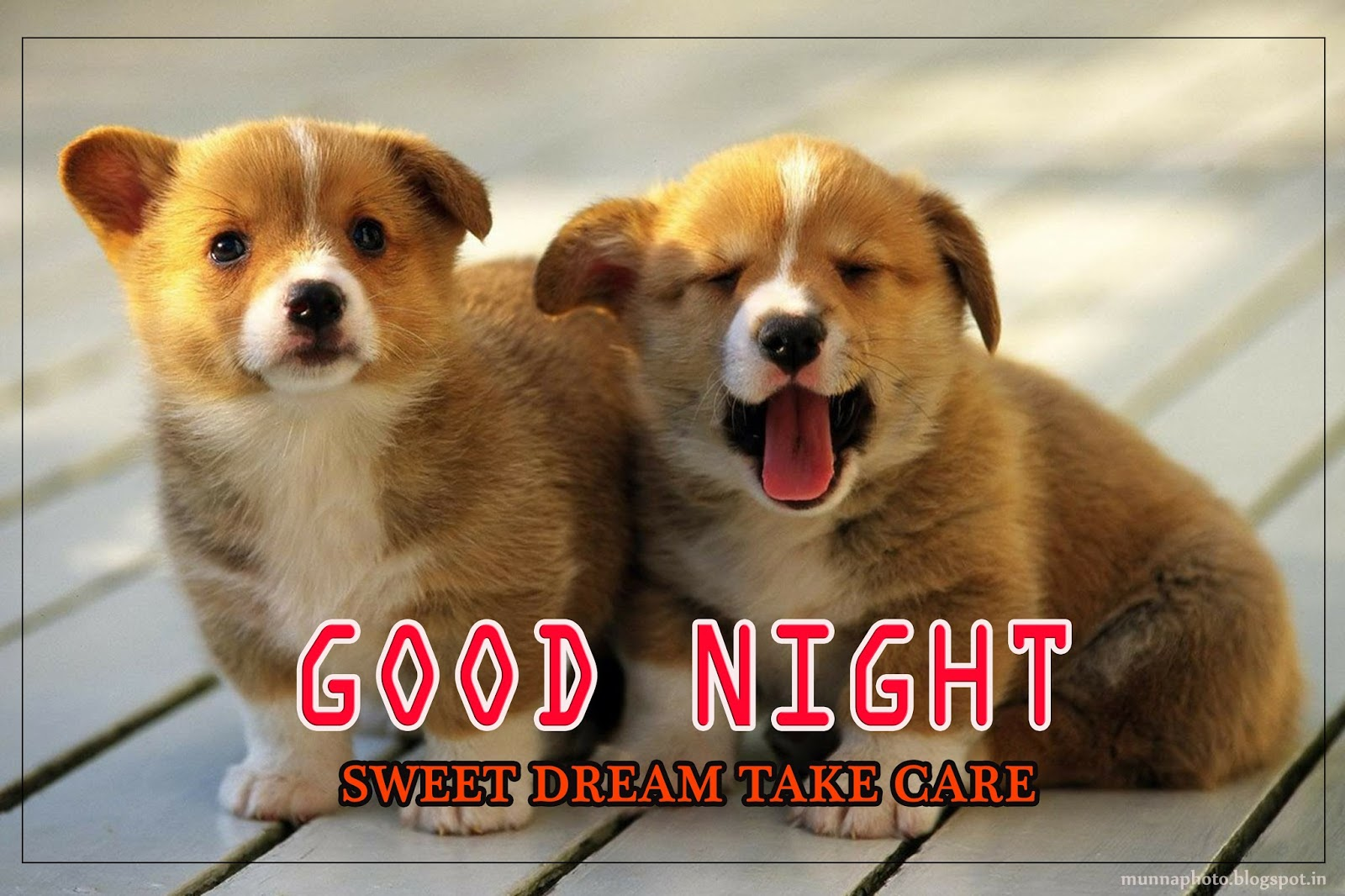 Ifel Tower Dog Good Night Wallpaper Munna Photo