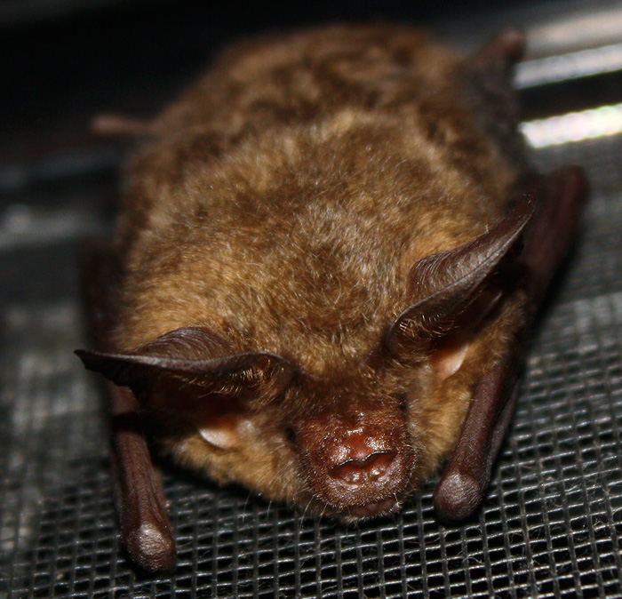 Babe There S A Microbat At The Door