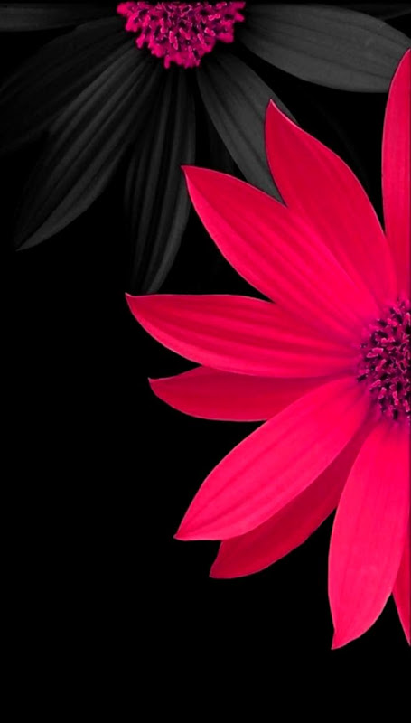 Flowers Wallpapers Free Download Zedge Wallpapers Home Screen