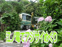 江ノ電でアジサイめぐり