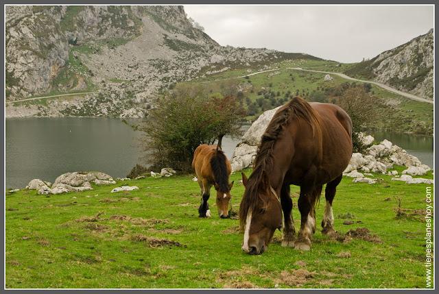 Caballos en Lagos de Covadonga