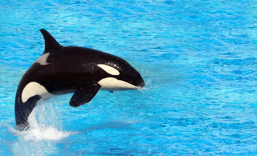 Good News: Canada Bans The Captivity Of Whales And Dolphins