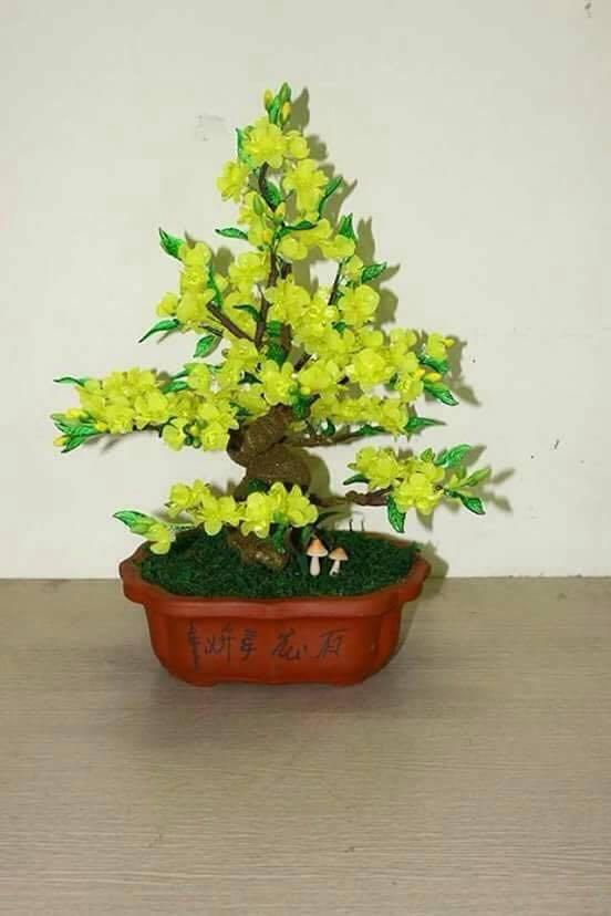 Goc bonsai mai dao cay hoa mai o Nguyen Thuong Hien