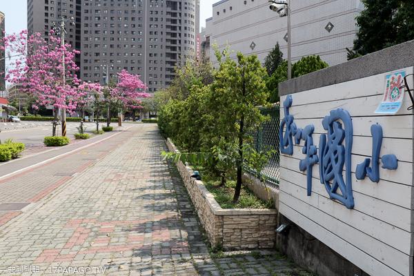 台中南區|和平國小洋紅風鈴木|復興北路自行車道賞風鈴木