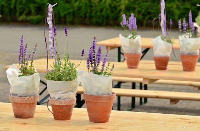 Lavender Adalah Jenis Tanaman Yang Memberikan Energi Positif, Ketenangan Serta Kenyaman Di Rumah