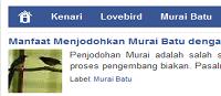 Situs Budidaya burung kicau budidayakenari.com
