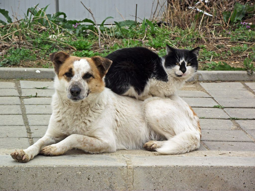 40. Cat sitting on a dog, Byala, Bulgaria