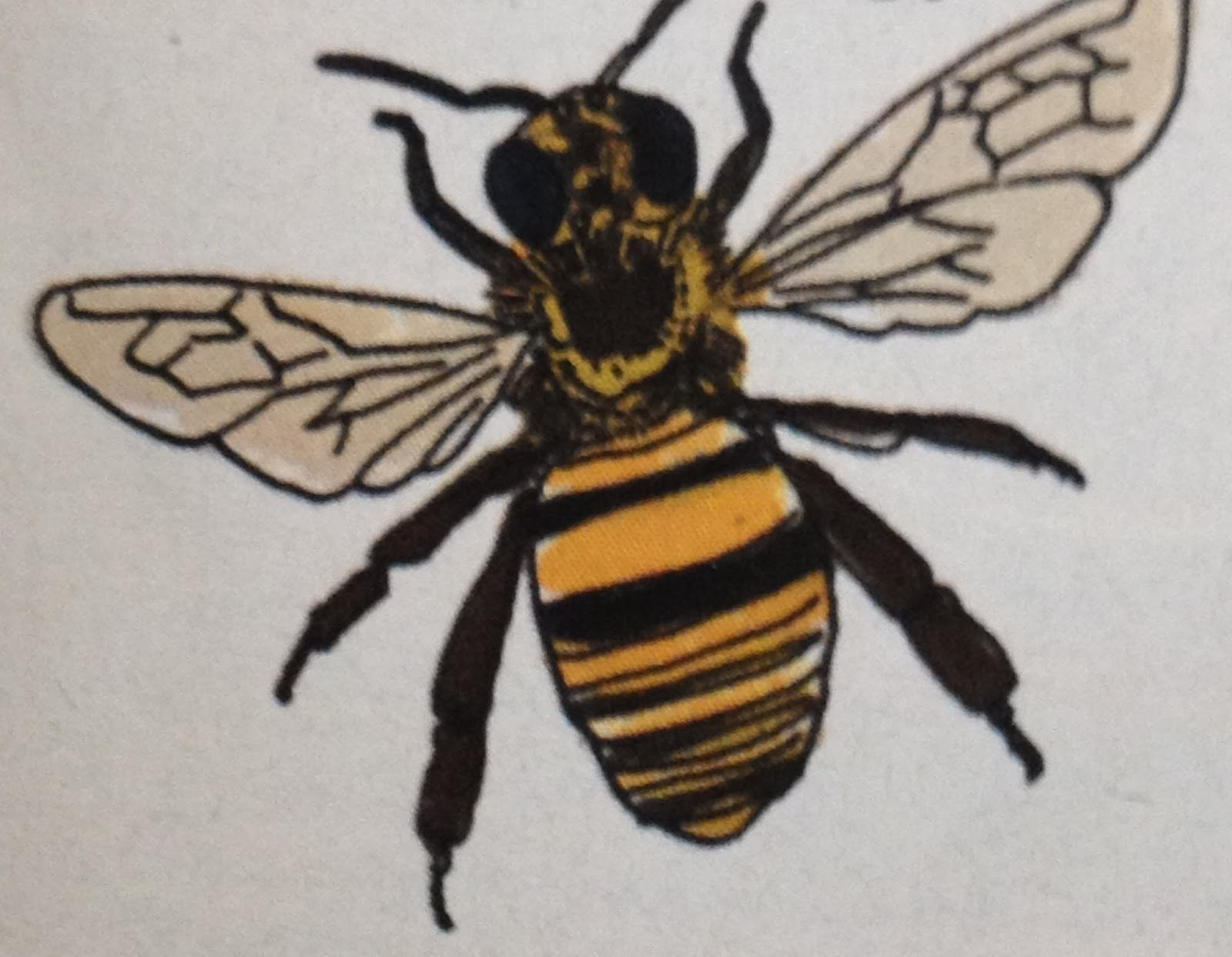 Bee Body Pictures To Pin