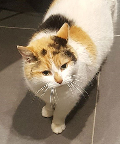 Chloe cat reunited by Cats Protection