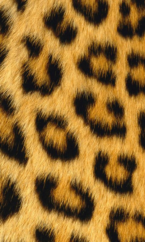 Leopard Animal Print Wallpaper Fondos Para Whatsapp Patada De Caballo Piel De