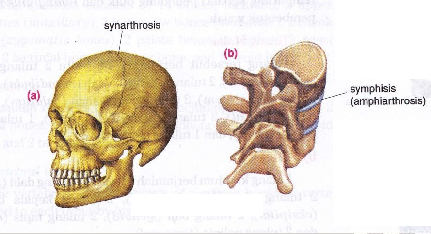 The Structure of Joint and Various Types of Joint's Shape ...