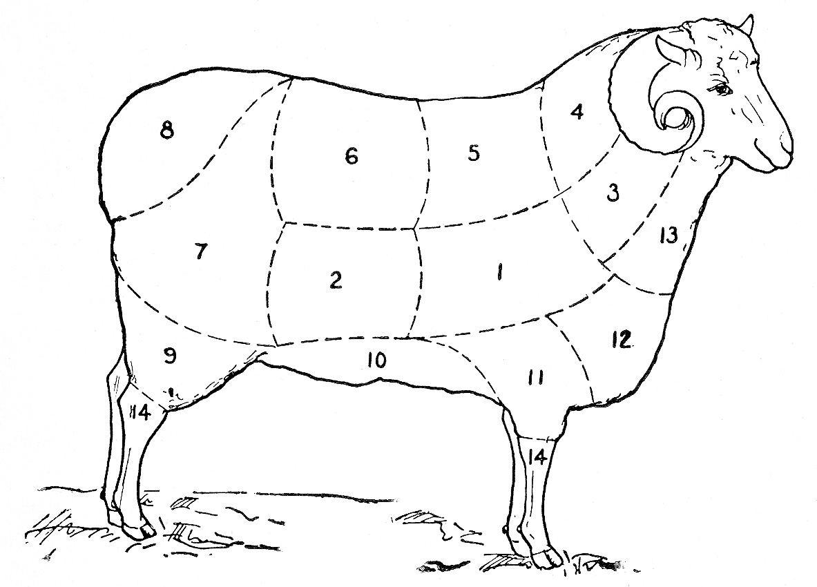 Clip Art Sheep