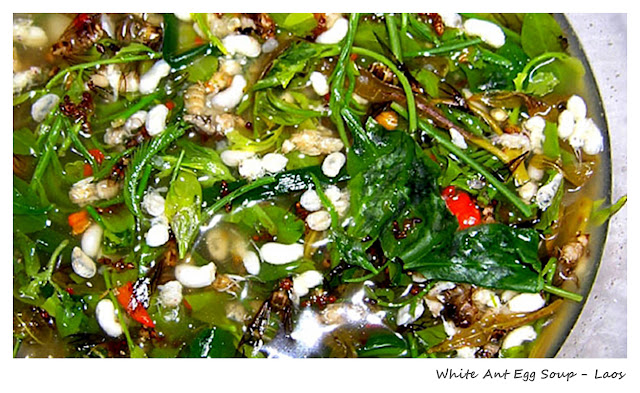 Top 10 Weirdest Food in Asia - White Ant Egg Soup - Laos | Ramble and Wander
