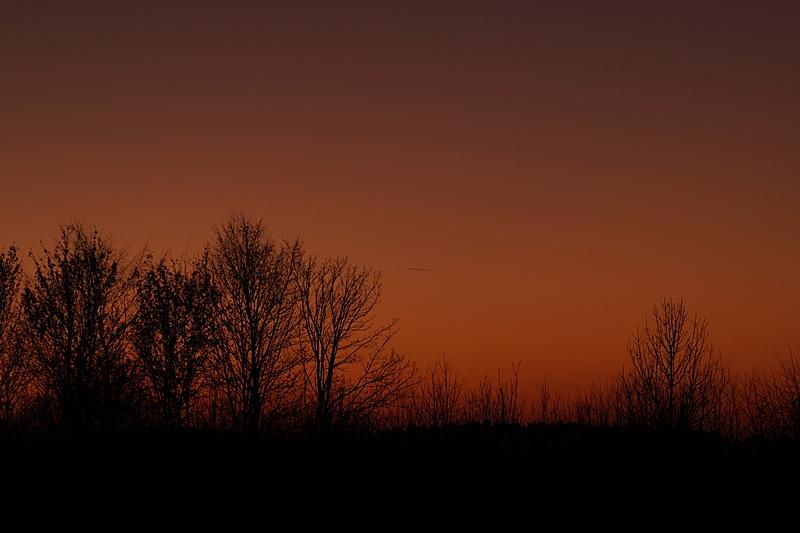 Dunkler Abendhimmel im Winter nach Sonnenuntergang, im Vordergrund kahle Büsche