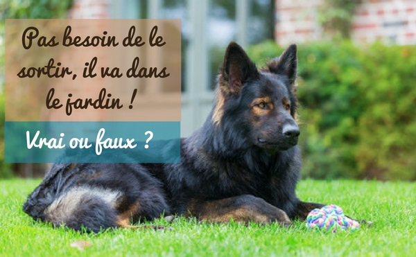 Est-ce que laisser son chien dans son jardin permet de diminuer la fréquence des sorties ?