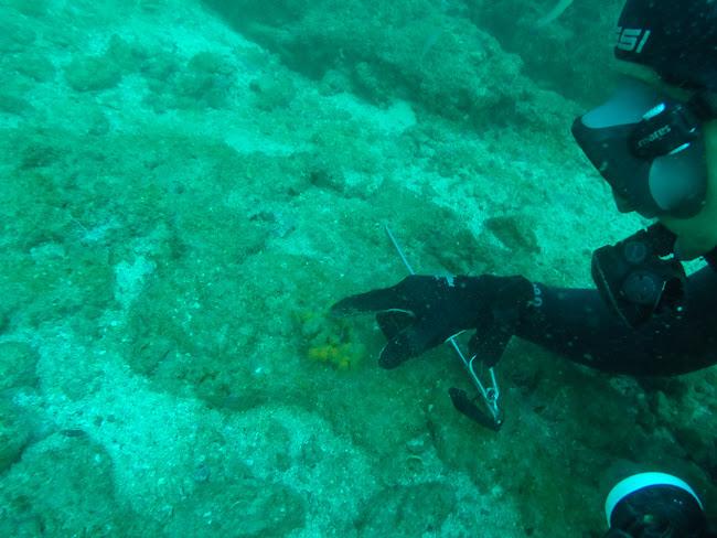 Nuestro monitor señalándonos un caballito de mar