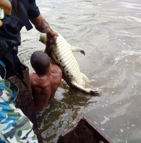 See the Big Alligator Killed by Officials of the Nigerian Military at Navy Town in Lagos (Photos)