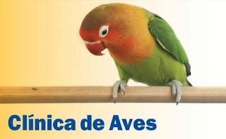 baicar-download-livro-clinica-de-aves-tully-pdf-livros-de-veterinaria-gratis