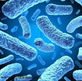Pengertian, Jenis-Jenis, dan Peranan Ganggang Biru (Cyanobacteria) Bagi Kehidupan Manusia