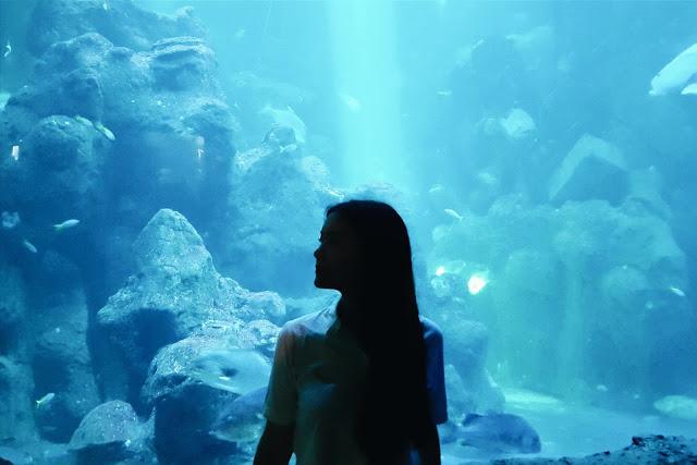pinapina-jalan-jalan-ke-seaworld-jakarta-akuarium-raksasa