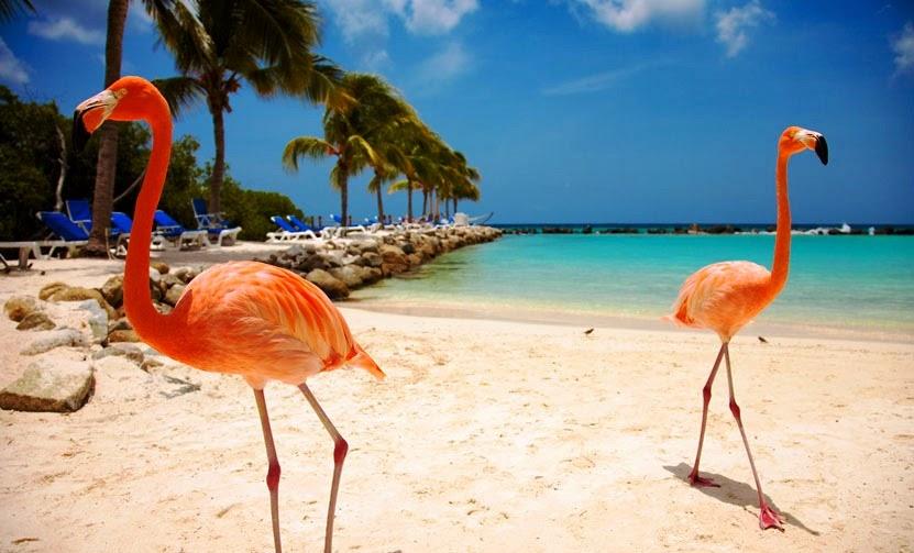 Restaurantes em Aruba no Caribe