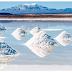 Elektrikli Araç Teknolojisinde Tuz Gölü Etkisi