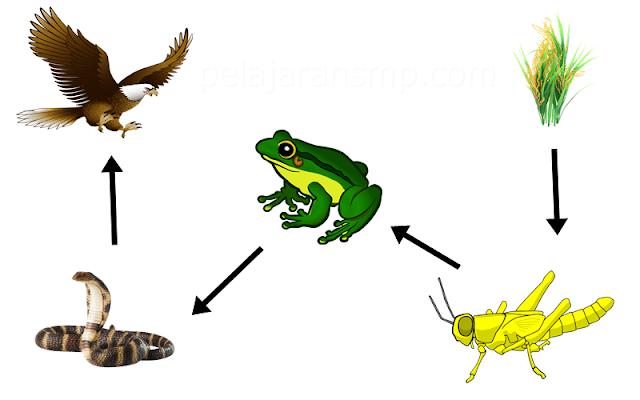 Soal Latihan Materi Ekosistem, Komponen Abiotik, Kompnene Biotik, Rantai Makanan, Jaring Makanan, dan Piramida Makanan Beserta Pembahasannya