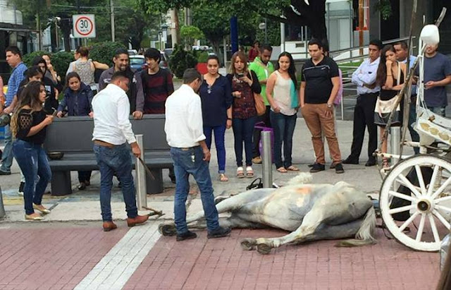 Retirarán calandrias de Guadalajara tras caída de caballo