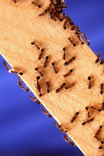 How To Easily Get Rid Of Ants In Your Home