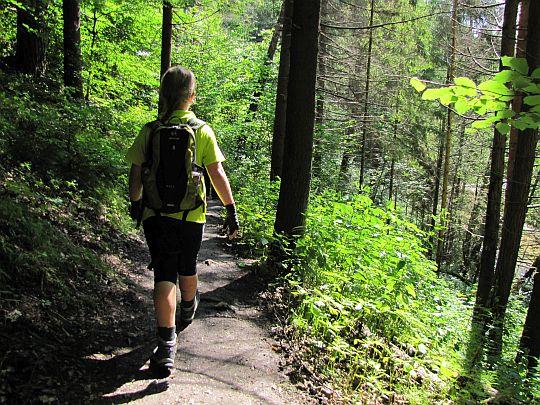 Wygodna leśna ścieżynka.