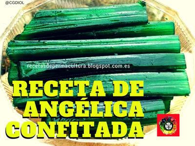Angélica Confitada deliciosa receta con los tallos con azúcar de esta planta medicinal