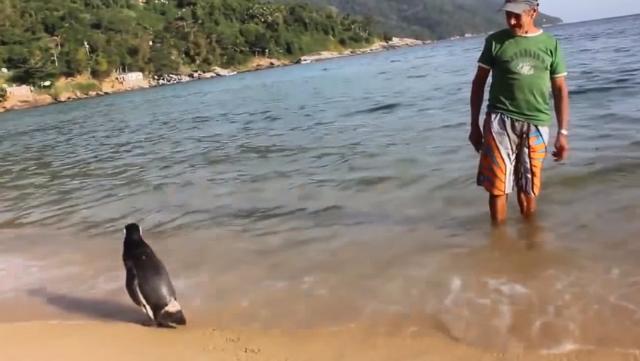 Pinguim Dindin vem sempre visitar o homem que o salvou