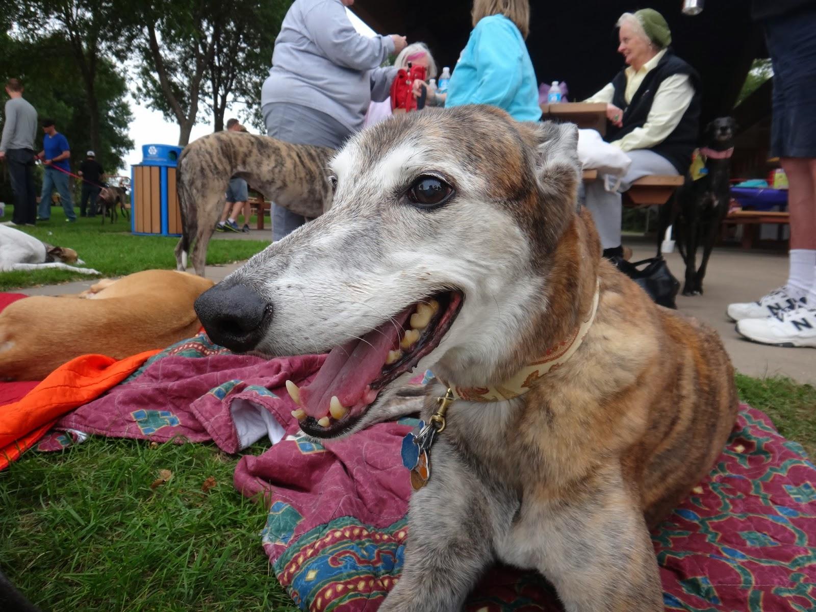 Northern Lights Greyhound