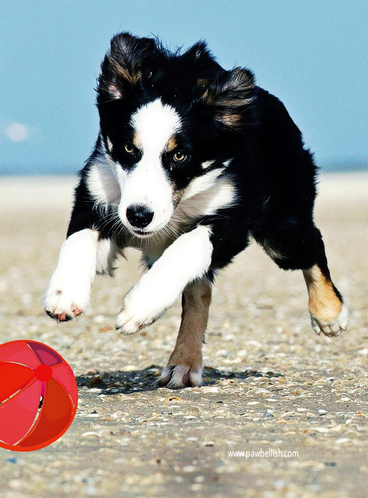 Great list of ideas to help you choose a name for your new puppy dog.