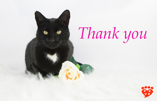 Companion Animal Psychology is 7! Thank you to everyone who supports the blog. Photo shows a tuxedo cat, a rose, and message Thank you.