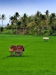 ladang atau sawah