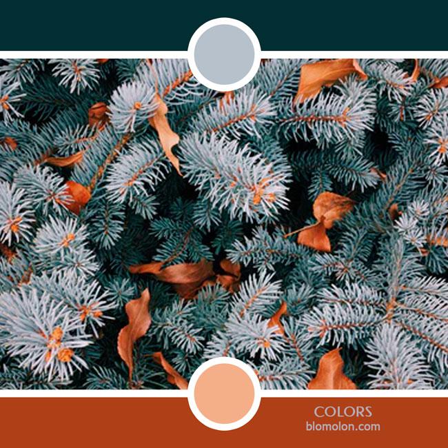 variedad_en_color_color_71