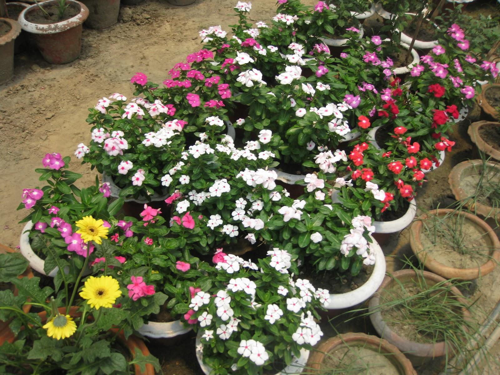 Perennial Flower Names This Flower Name Is Phlox