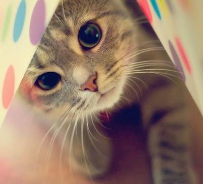 Un lindo gatito tierno cubierto con una sabana