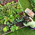 Keep Your Health and Wellness by Gardening Veggies