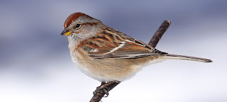 Image result for brown bird