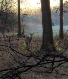 Whitetail, Whitetail Deer, buck, rut, deer, deer hunting, ohio, outdoors, deer hunting blog, whitetail deer hunting, rattling, calling deer